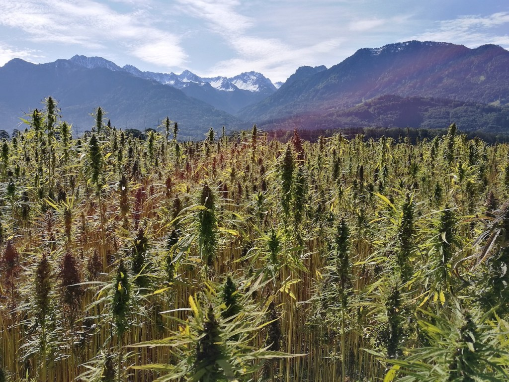 Can Hemp Save the Planet? Here's Six Ways it Can Help